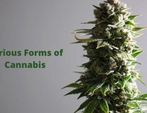 Various Forms of Cannabis